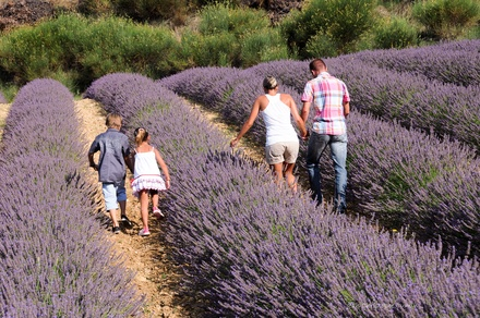 Séjour Plantes et Bien-Être en Baronnies Provençales
