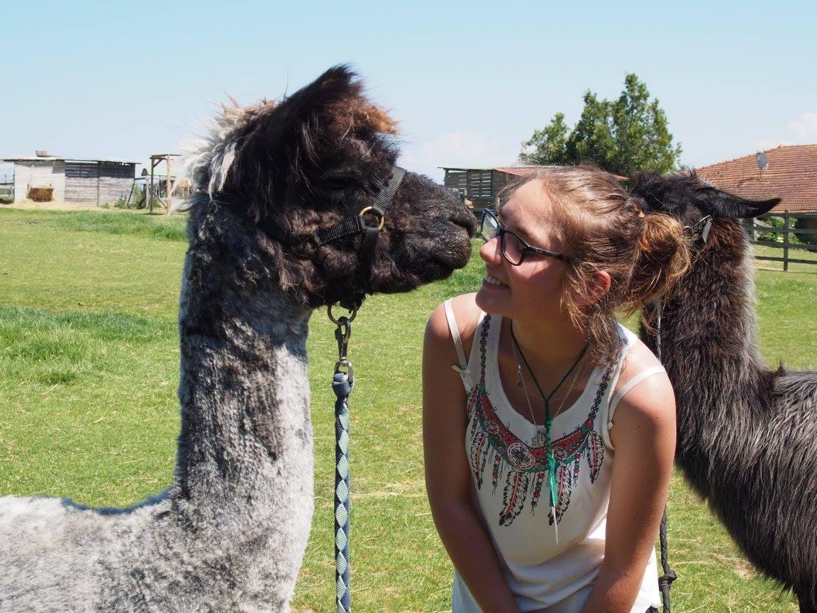 Atelier et visite dans un élevage de lamas