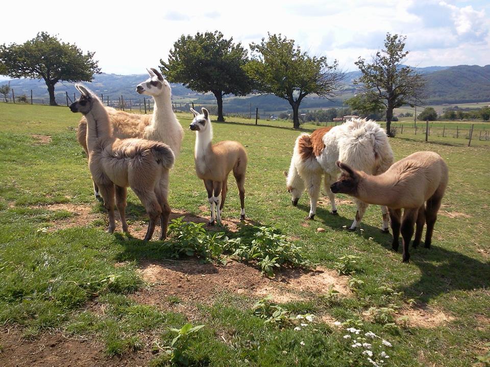 Visite guidée de l'élevage