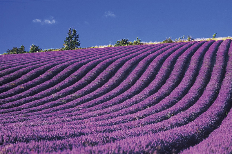 Day Tour : Provence And Its Lavender