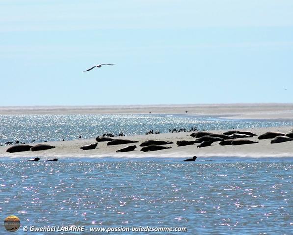 La Baie au gré des marées (E) - Au Hourdel