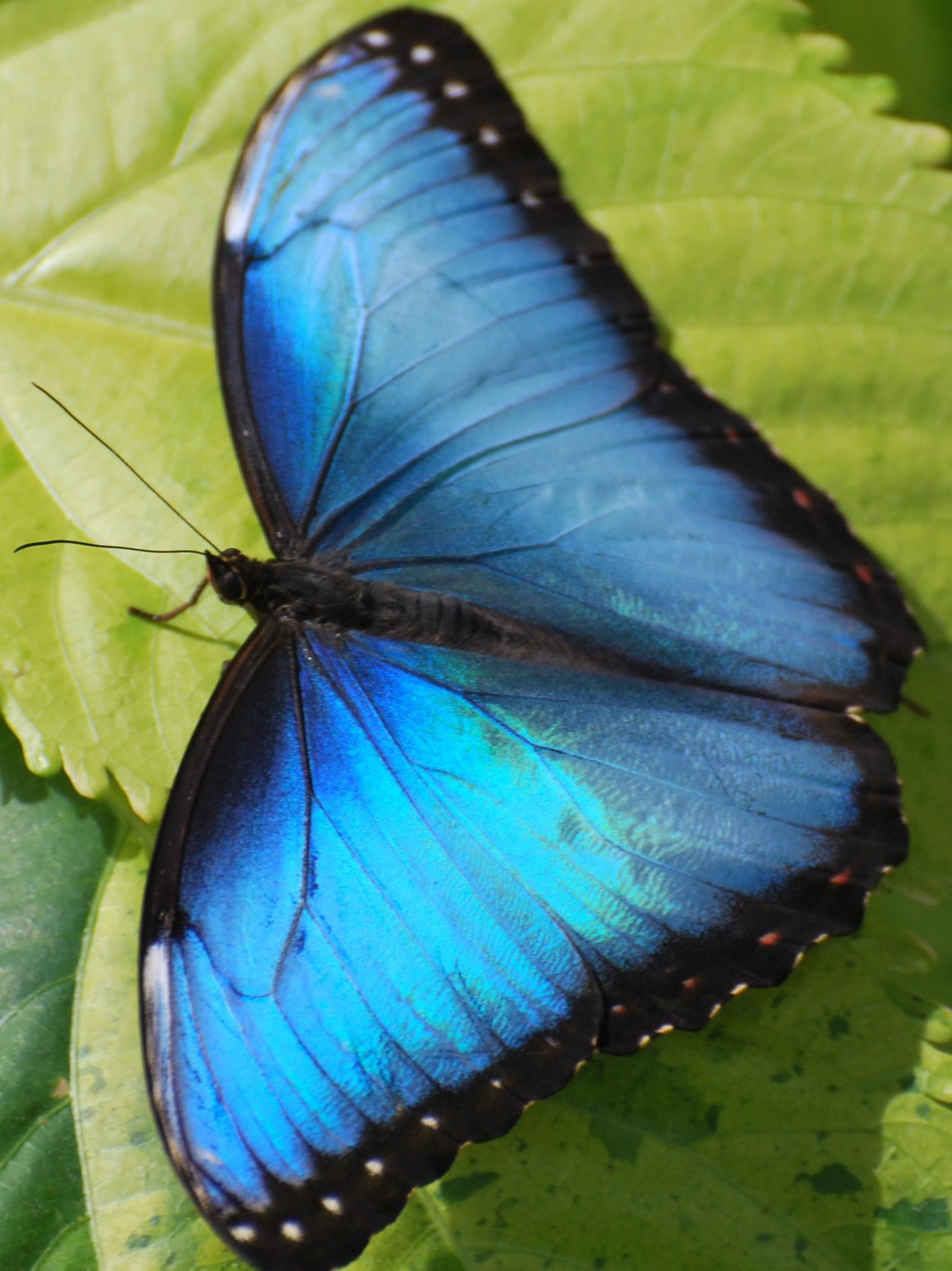 Exposition Papillons en Liberté