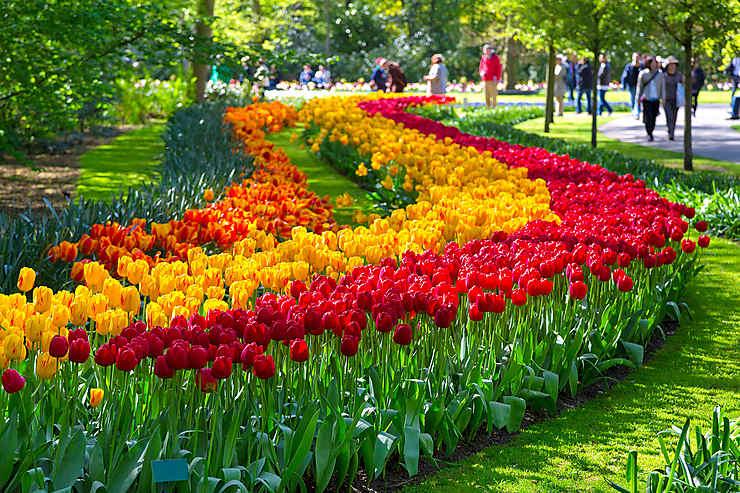 Keukenhof : Le plus grand parc floral au monde où pas moins de 7 millions de bulbes sont exposés.