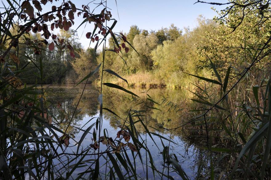 Escapade nature dans la Réserve Naturelle du Bassée-Montois