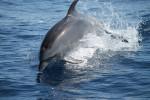 Découverte du grand dauphin