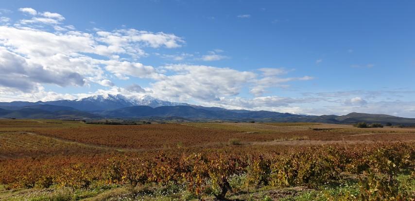Découverte des vignobles au pied du Canigou sur la journée