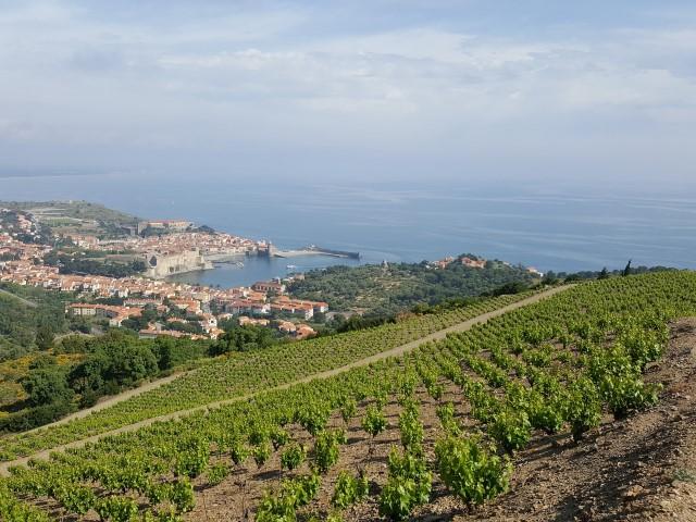 Balade Découverte du vignoble de Collioure - 1/2 journée