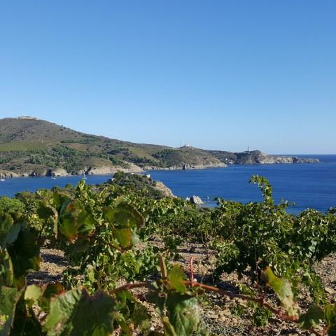 Vignoble de la Côte Vermeille sur deux jours