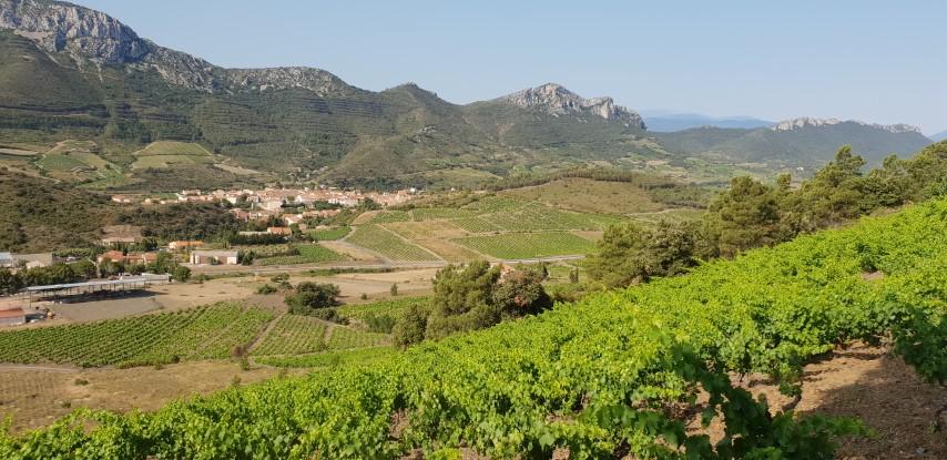 Vignobles des Pays Cathares, découverte sur une journée