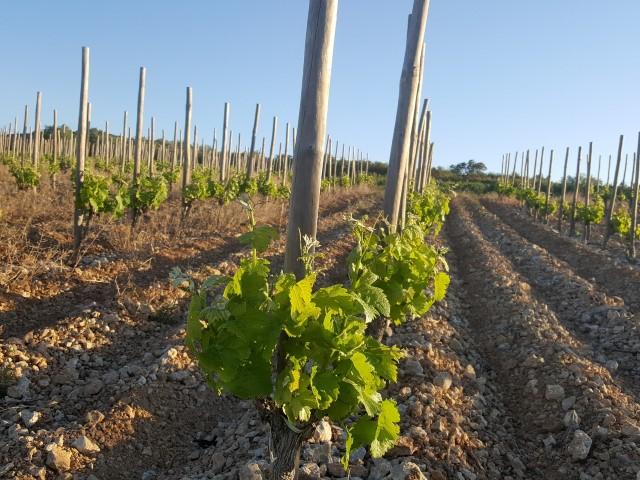 Découverte des vins bio sur deux jours