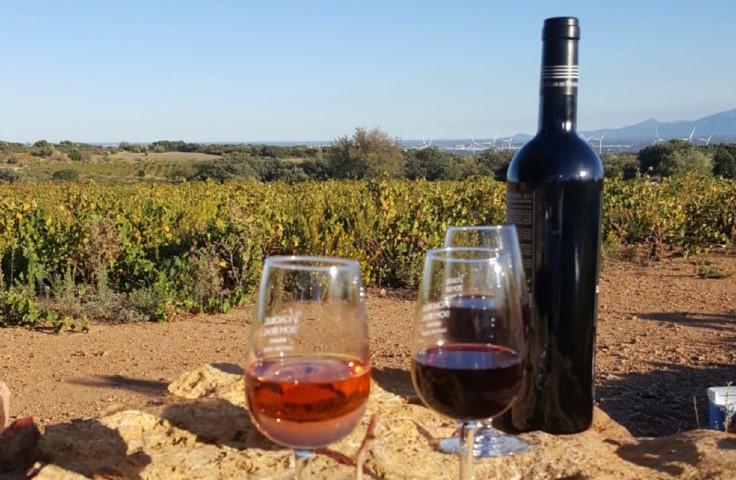 Découverte des vins bio sur un jour