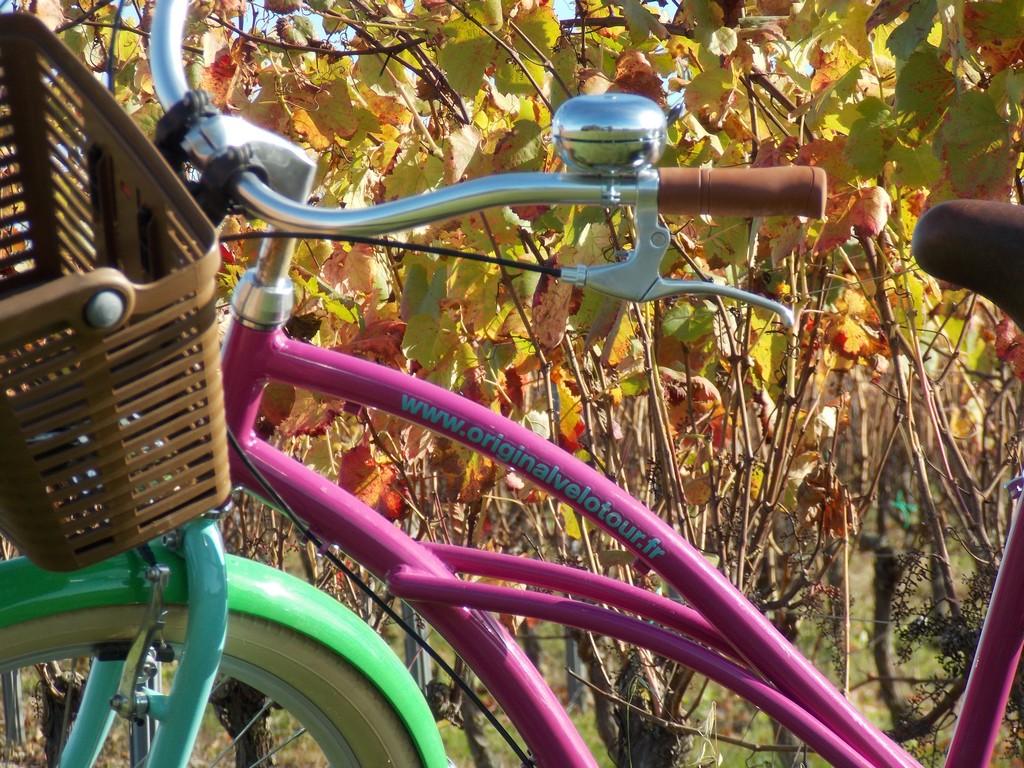 Balade vélo dans les vignes de Pissotte