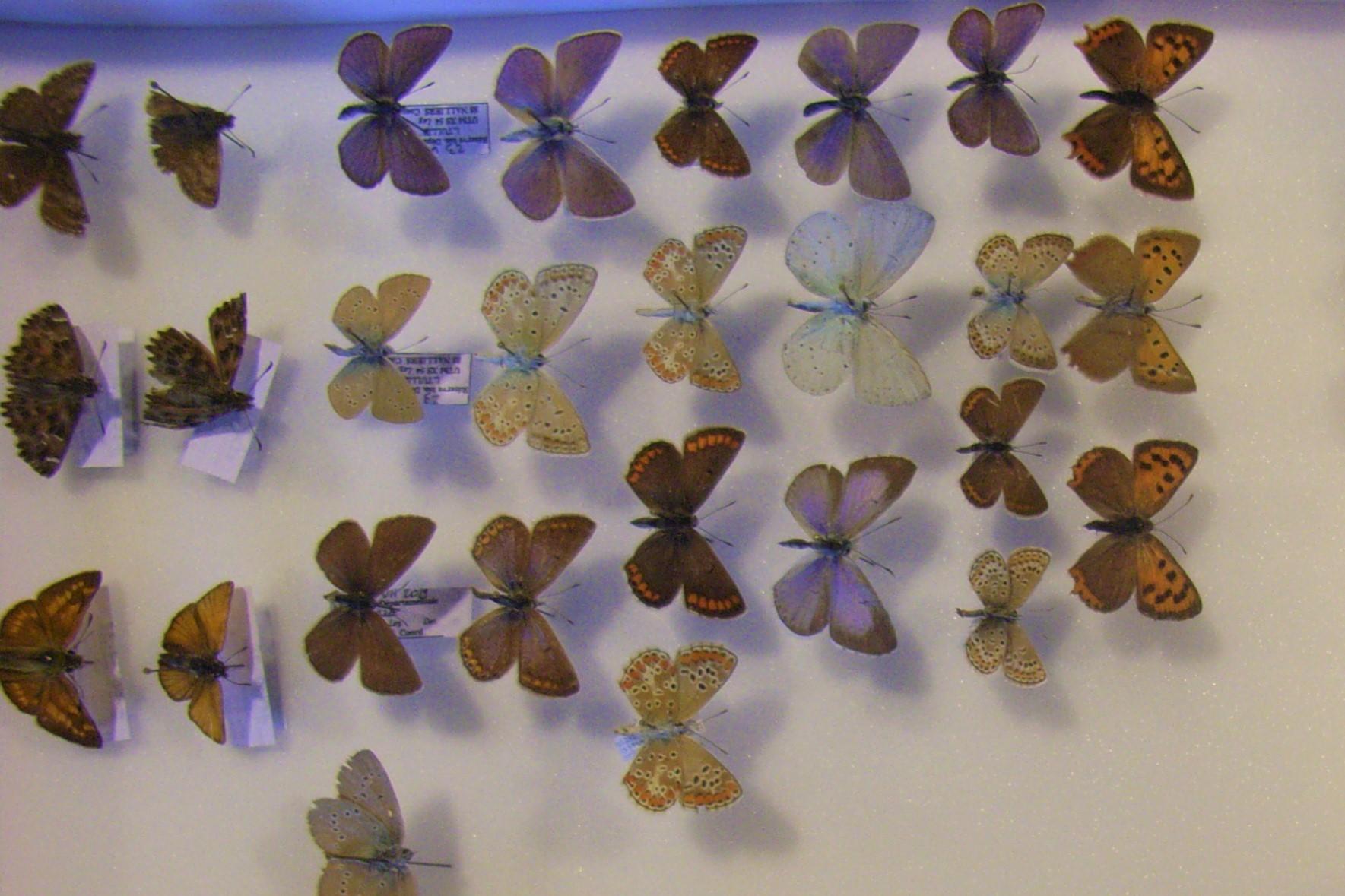 Collections naturalistes : inventaires de biodiversité !